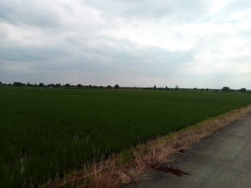 荒川CR大宮付近の田んぼ
