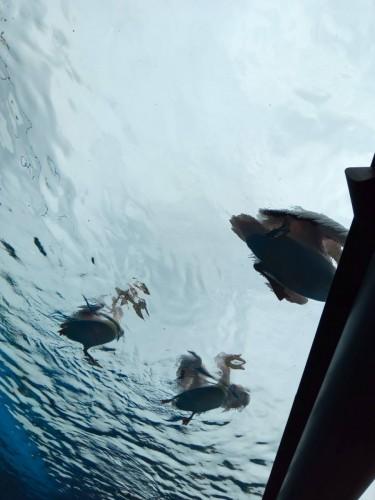 サンシャイン水族館ペリカン